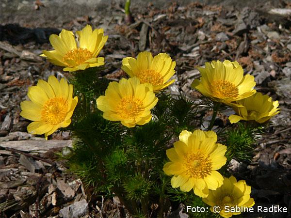 Garten Rostock botanischer garten der universität rostock